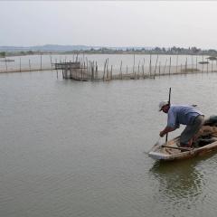 Thừa Thiên Huế: Giá rét gây bất lợi cho thủy sản nuôi