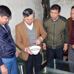 Nhân giống thành công cá tiến vua đắt nhất Việt Nam