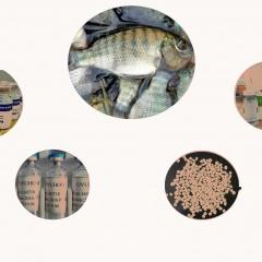 Hormone sử dụng trong sản xuất cá giống