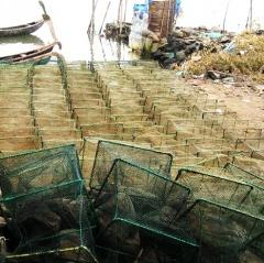 Cạn kiệt nguồn lợi vì sử dụng lờ bóng Thái Lan khai thác