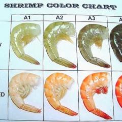 Vai trò và chiến lược cải thiện màu sắc của tôm nuôi