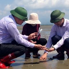Quảng Ninh: Ngao chết do mật độ nuôi quá dày nước thiếu ôxy và tảo