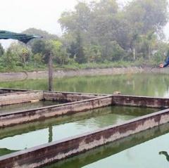 Làng nghề nuôi cá chép tất bật trước ngày ông Công ông Táo