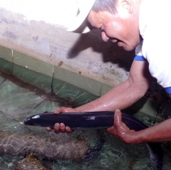 Làm giàu nhờ mô hình nuôi cá chình mun châu trúc
