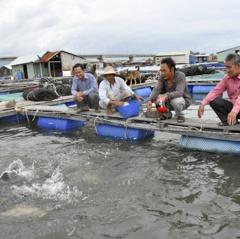 Người dân nuôi cá lồng bè bội thu vụ Tết