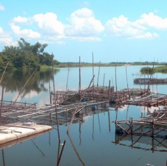 Mô hình nuôi cá lồng trên sông ở Hải Lăng gặp khó khăn