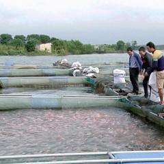Lịch mùa vụ nuôi thủy sản Quảng Nam năm 2019