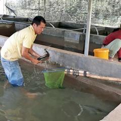 Triển vọng nuôi cá tầm ở Ðam Rông