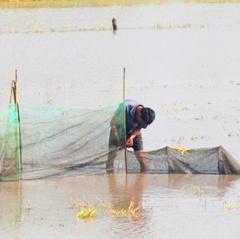 Vĩnh Long: Diện tích, sản lượng, giá thủy sản nuôi trồng tăng