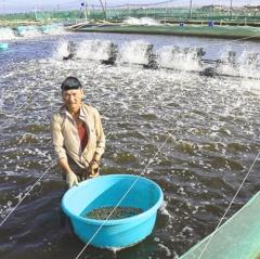 Ninh Thuận: Nuôi trồng thủy sản hướng đến mục tiêu bền vững