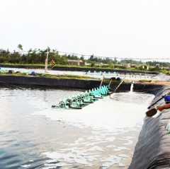 Khung lịch thời vụ thả giống nuôi thủy sản Hà Tĩnh năm 2019