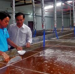 Hà Tĩnh: Tăng cường quản lý môi trường và chất lượng tôm giống