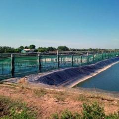 Triển vong mô hình nuôi tôm siêu thâm canh ở Trà Vinh