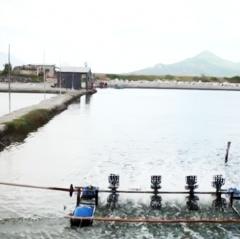 Khôi phục lại nghề nuôi trồng thủy sản ven Đầm Nại