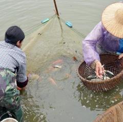 """Hà Tĩnh xây dựng """"vệ tinh"""" ương cá giống chất lượng cao"""