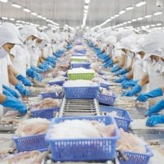 Doanh nghiệp thủy sản bị mao danh để xuất khẩu