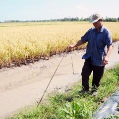 Nông dân ĐBSCL phấn khởi nhờ trúng mùa tôm lúa
