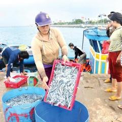 Ngư dân Quảng Ngãi trúng đậm cá cơm những ngày cận tết