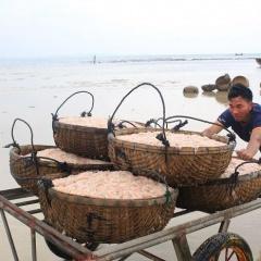 Ngư dân Quãng Ngãi trúng đậm mùa ruốc biển