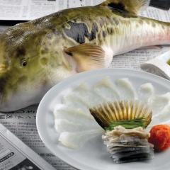 Sản lượng thu mua cá nóc đạt 500 - 600 tấn/năm
