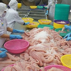 Dự báo đầy hứa hẹn cho cá tra Việt Nam