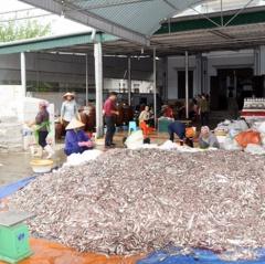 Chế biến thủy hải sản Hà Tĩnh vào vụ