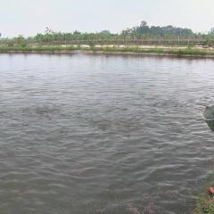 Chuyển ruộng lúa kém hiệu quả sang nuôi cá ở Yên Mô