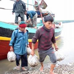 Sau chuyến biển đầu năm Ngư dân Lạch Vạn đem về hơn 10 tấn tôm