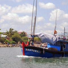 Bình Định: Ngư dân đã khai thác được 760 tấn cá ngừ đại dương