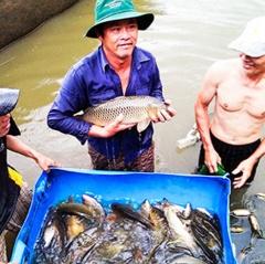 Khánh Hòa: Nhân rộng mô hình nuôi cá chép giòn