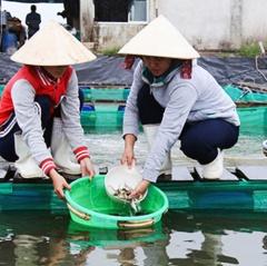 Khánh Hòa: Tăng cường quản lý giống thủy sản