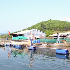 Giúp đồng bào vùng cao nuôi trồng thủy sản