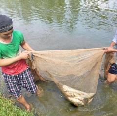 Nông dân nuôi cá nước ngọt được mùa