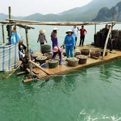 Tình trạng nuôi trồng thủy sản ngoài quy hoạch ở Vân Đồn