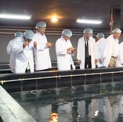 Ninh Thuận phát triển Trung tâm tôm giống chất lượng cao