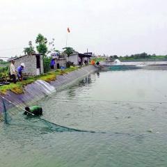 Hải Hà: Nuôi trồng thủy sản theo hướng bền vững