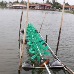 Chuẩn hóa chuỗi tôm hướng tới xuất khẩu