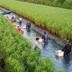 Tăng thu nhập trên đất lúa - tôm