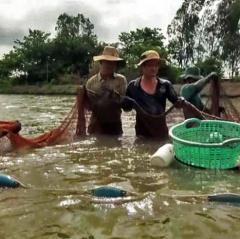 Sóc Trăng sẽ hạn chế thiệt hại cho tôm nuôi nước lợ