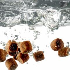 Thức ăn theo mùa: Cho ăn phù hợp với sinh lý cá