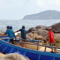 Tuy An - Phú Yên: Tôm hùm nuôi lại chết, người dân lao đao
