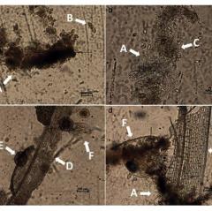 Công nghệ biofloc nuôi tôm và vai trò bổ sung carbohydrate