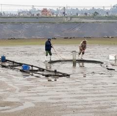Hơn 80% diện tích nuôi tôm ở Hà Tĩnh chuẩn bị thả giống