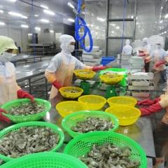 EU sẽ là thị trường tỷ đô đầu tiên của tôm Việt Nam?