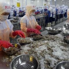 Xuất khẩu tôm sang Mỹ giảm nhưng triển vọng vẫn lạc quan