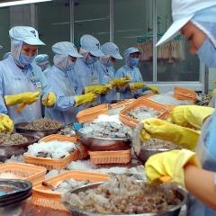 Tăng cạnh tranh cho ngành tôm Việt Nam