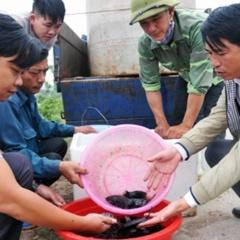Ninh Bình: Hỗ trợ 5000 con cá giống với mô hình nuôi cá mú thương phẩm