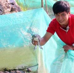 Chàng trai bỏ phố về quê là giàu với nghề nuôi ếch