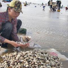 Độ mặn tăng cao làm chết hơn 100 tấn nghêu nuôi