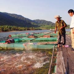 Nghề nuôi cá lồng ở Vĩnh Thạnh